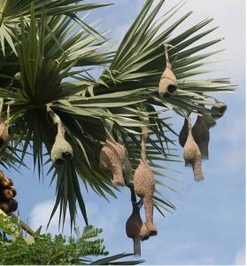Birds tree architecture