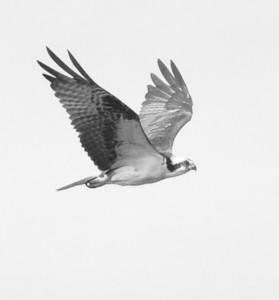 Bird inspired design